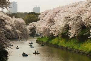 th桜2.jpg